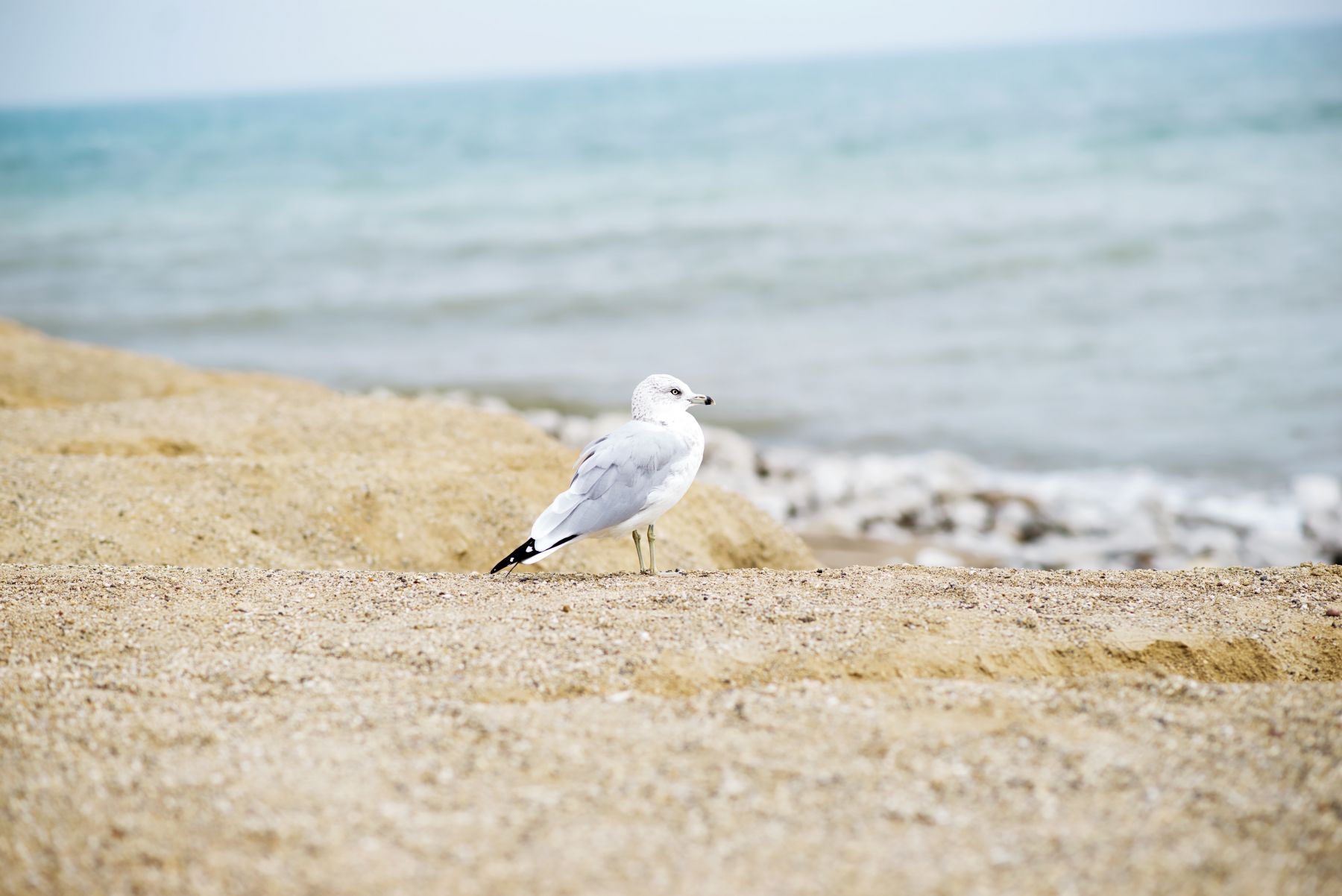 seagull-on-beach
