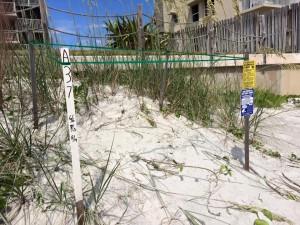 nest-barrier-NSB-2013-2