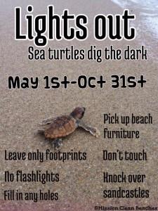 turtle blog
